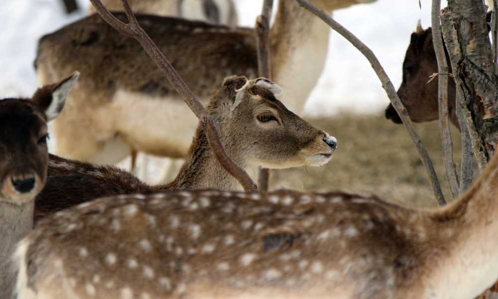 How to Hang a Deer Feeder & Attract Deer