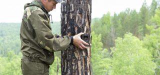 BlazeVideo HD 16MP Night Vision Hunting Video Trail Wildlife Camera