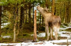 Salt Lick for Deer: A Guide for Buying and Using Them