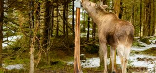 Salt Lick for Deer: A Guide for Buying & Using Salt Licks