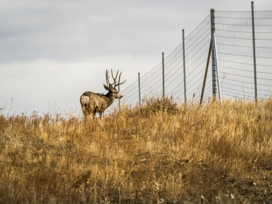 Deer Fence – Your Complete Guide