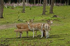 The Importance of Deer Protein Feed as a Supplement