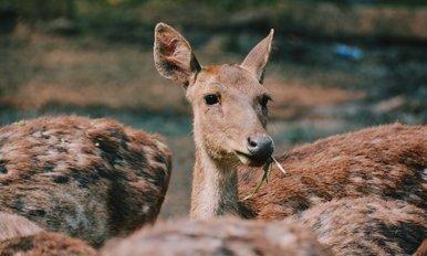 best deer feed