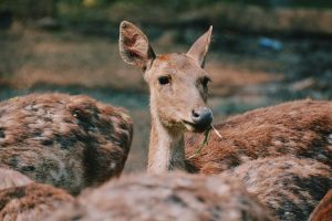 Best Deer Feed: What Do Deer Like To Eat?