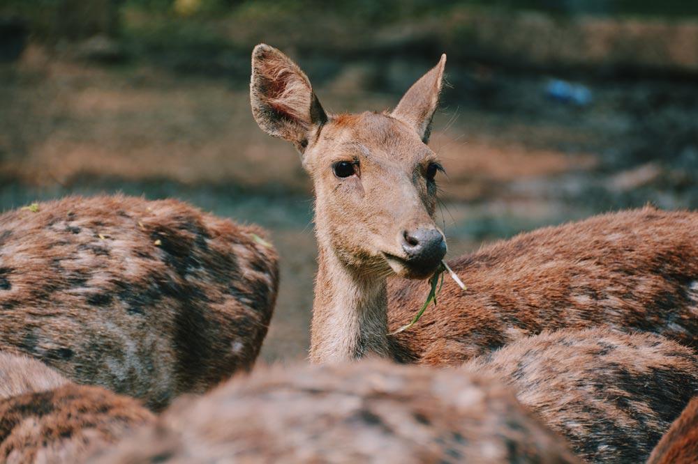 Best Deer Feed: What Do Deer Like To Eat (including 4