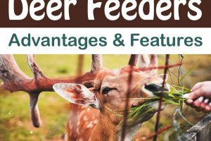 Deer Feeders Advantages & Features