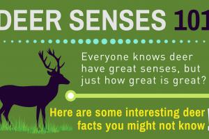 Deer Sense 101