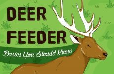 deer feeders basics