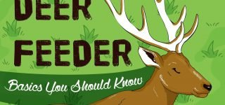 Deer Feeders: Basics You Should Know