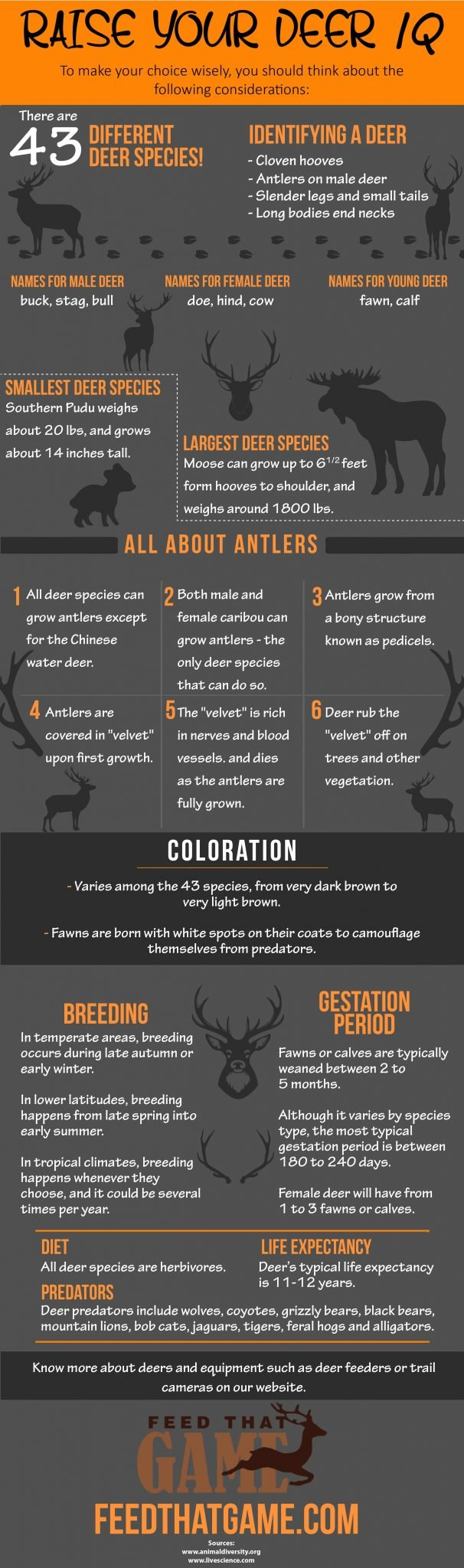 raise your deer knowledge
