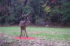 8 Best Deer Attractant Products on the Market