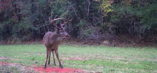 Top 8 Best Deer Attractant Products on the Market