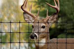 Tenax Deer Fence Review- The Best Deer Fencing – 60100109 Pro