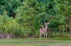 Watch Out For EHD In Deer – Here's What You Need To Know