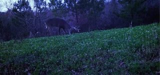 6 Deer Food Plot Mistakes to Avoid This Year