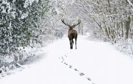 A Definitive Guide To Tracking Deer Prints In Snow