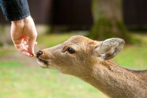 What To Feed a Baby Deer: Tips To Feed A Fawn