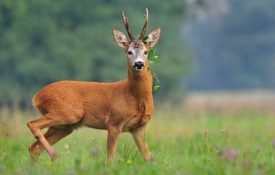 How Does Deer Hunting Help The Environment?