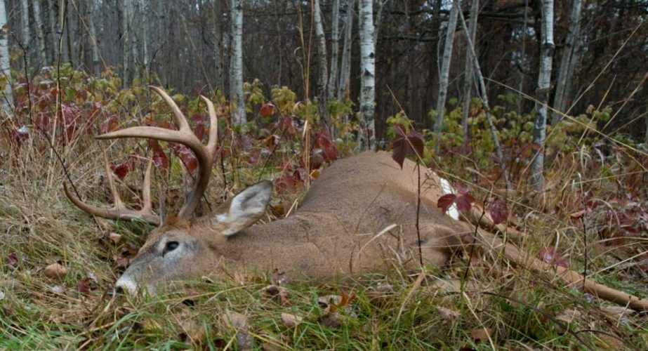 How Does Deer Hunting Help The Environment
